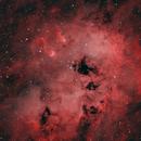 IC 410 Tadpoles,                                John D (jaddbd)