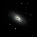 M64 - The Black Eye Galaxy,                                Paul O'Brien