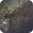 Cygnus Constellation - SHO,                                Awni Hafedh