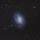 NGC 300 - Spiral Galaxy in Sculptor (DSS 5D2a),                                Martin Junius