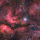 Sadr nebula complex,                                Alessandro Carrozzi