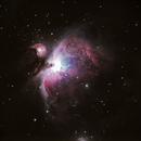 M42 Orion Nebula,                                Joe Niemeyer