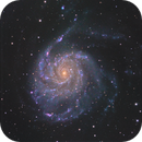 M101  with different setup of Sky Processing Team/C8EdgeHd 2m focal and Ts102 for colors,                                Maxime Tessier