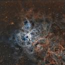 Tarantula Nebula SHO,                                Tom Peter AKA Ast...