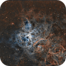Tarantula Nebula SHO,                                Tom Peter AKA Astrovetteman