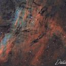 IC 5068 in Cygnus,                                David Wills (Pixe...