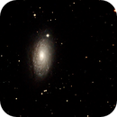 Sunflower Galaxy,                                Robin Clark - EAA imager