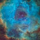Rosette Nebula in SHO,                                Rex Robichaux
