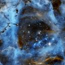 Rosette Nebula, NGC2244 SH2-275,                                Anne-Maree McComb