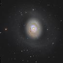 Messier 94 in Canes Venatici,                                Steve Milne