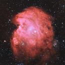 NGC2175 The Monkey's Head nebula,                                Greg Ray