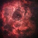 Unguided Rosette nebula,                                manxkats