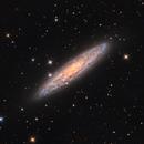 NGC 253 - ESCULPTOR GALAXY,                                Irineu Felippe de Abreu Filho
