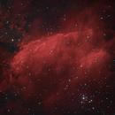 Prawn Nebula IC 4628 - Ha starless and few RGB - :-),                                Daniel Nobre
