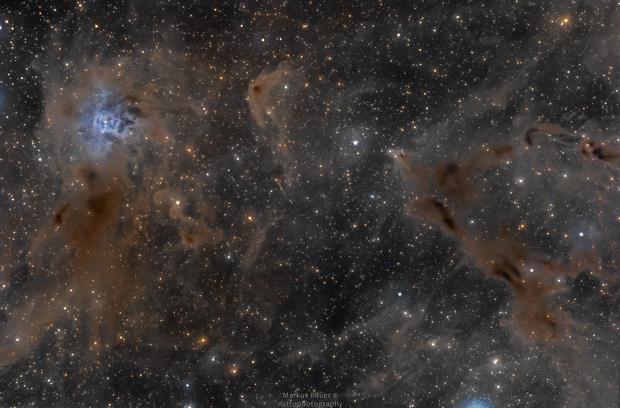 Iris Nebula (NGC7023) and Surroundings (LDN1158),                                Markus Bauer