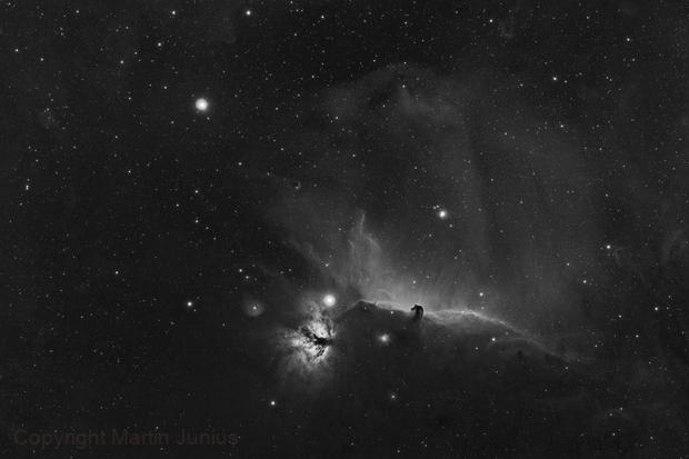 Horsehead Nebula and Friends - B33 - IC 434 - NGC 2024 - BW (Theli v1 Red) ,                                Martin Junius