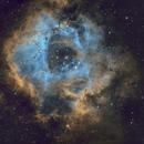 Rosette Nebula (C49) and NGC2244/ C50 SHO,                                JD
