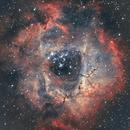 NGC 2244, Rosette Nebula,                                Aleksander Sørensen