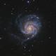 "Messier 101 the glorious ""Pinwheel"" Galaxy,                                Barry Wilson"