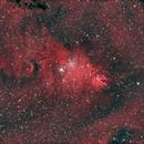 NGC 2264,                                Mark L Mitchell