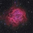 NGC2237-9,46 The Rosette Nebula, NGC2244; Monoceros,                    Thomas V. Davis