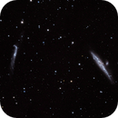 Whale Galaxy NGC4631 LRGB,                                Rob Calfee