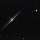 NGC 4565 - Needle Galaxy,                    Falk Schiel