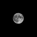 Harvest Moon,                                Zach Coldebella