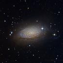 Sunflower Galaxy, M63  *AAPOD2*,                                Dan Wilson