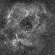 C49 Rosette Nebula-Ha,                                Adel Kildeev