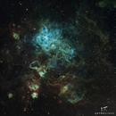 Tarantula Nebula,                                Astrosingh