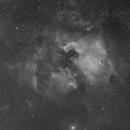 North American and Pelican Nebulae in Ha,                                Steven Christensen