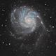 M101 The Pinwheel Galaxy,                                Yuichi Kawamoto