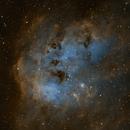 IC 410 Tadpole,                                Brian Blau