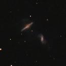 Arp 293 (NGC6285 and NGC6286),                                lowenthalm
