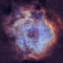 Rosette Nebula,                                tonymacc