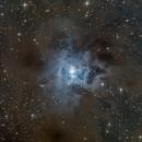 NGC 7023 Iris nebula,                                Fatalik