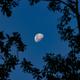 Half Moon from Costa Rica,                                Kurt Zeppetello