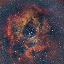 Rosette under a full moon,                                AcmeAstro