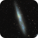NGC 55, The White Whale,                                Russ Carpenter