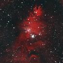 Christmas tree nebula,                                Brian Meyerberg