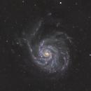 M101 in Ursa Major,                                pete_xl