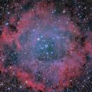 The Rosette Nebula,                                rveregin