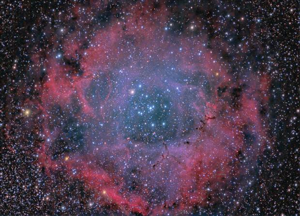The Rosette Nebula,                                Rick Veregin