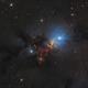 NGC 1333 in Perseus,                                Steve Milne
