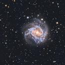 M83 Southern Pinwheel Galaxy,                                Erik