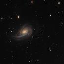 Nautilus galaxy NGC 772 and NGC 770,                                Saša Nuić