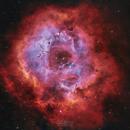 Rosette nebula,                                Emil Andronic