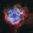 SH2-275 / NGC 2244 -The Rosette nebula & open cluster in Monoceros - SHO-RGB,                                Daniel.P