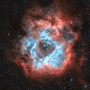 Caldwell 49 - Rosette Nebula in HOO,                                Dale Hollenbaugh
